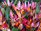 Fleurs de guyane