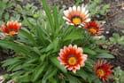Fleurs de l'eté