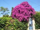 fleurs de la côte d'azur