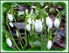 Fleurs de la purification