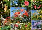 Fleurs de Martinique