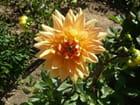 Fleurs de mon jardin