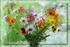 Fleurs de mon jardin (FA)