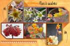 Fleurs de succulentes