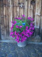 Fleurs de village