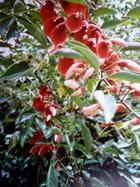 Fleurs des Canaries.