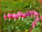 Fleurs diverses (1)