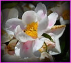 Fleurs diverses (2)
