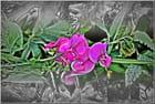 Fleurs du Robec