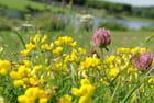 Fleurs du Vexin