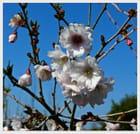 Fleurs en avril
