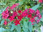Fleurs exotiques nom inconnu