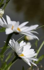 Fleurs nature...