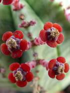 Fleurs originales