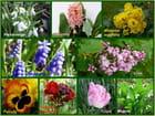 Fleurs parfumées de mon jardin