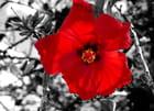 Fleurs sur fond Noir & Blanc