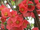Floraison flamboyante