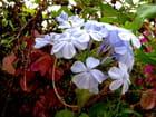 Flore de la Réunion, suite