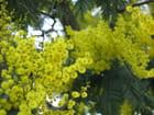 Flores da minha consolação