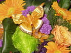 Florilege de couleurs