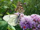 Foire aux papillons
