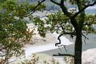 Fond du lac derrière les branches
