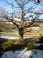 fonte de neige Lac de Ste Croix -les Salles sur Verdon