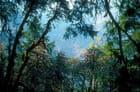 Forêt de cèdres et de rhododendrons