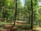 Forêt de Chamberceau