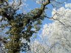 Forêt de faulquemont