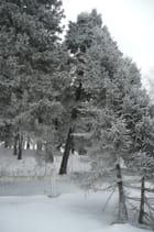 Forêt de givre