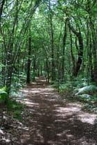 forêt de jeunes chênes
