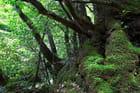 Forêt de Mononoke