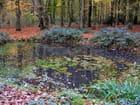 Forêt de Montgeon en automne