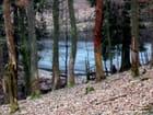 Forêt de Saint Hubert