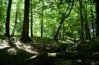 Foret de Vincence - Ruisseau du Buron