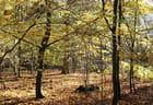 Forêt jaune