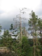 Forêt naturelle