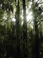 Forêt néo-zélandaise