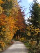 Forêt Noire-Allemagne