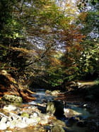Forêt parc la bourboule