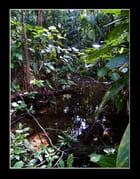 Forêt primaire tropicale