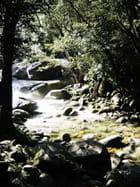 Forêt tropicale de Cairns