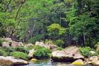 Forêt tropicale du Chiapas