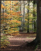 Forêts des Vosges du nord