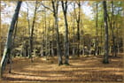 Forêts des Vosges du nord 2
