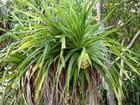 Fruit vert (1)