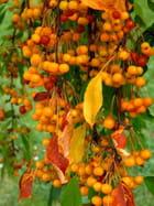 Fruits de fin de saison