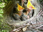 Fruits de nid
