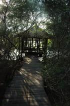 Gazebo dans la Mangrove